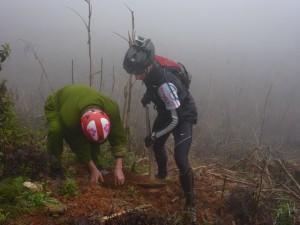 plant a tree vietnam
