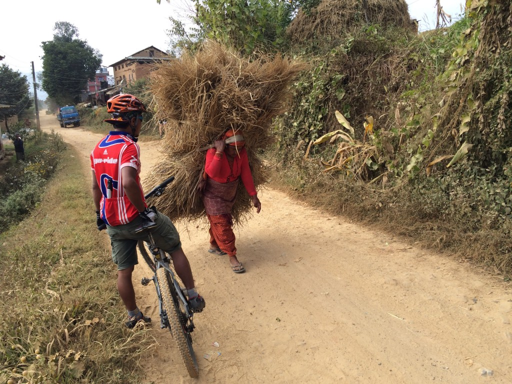 Stråene fra ris bæres ind fra markerne.