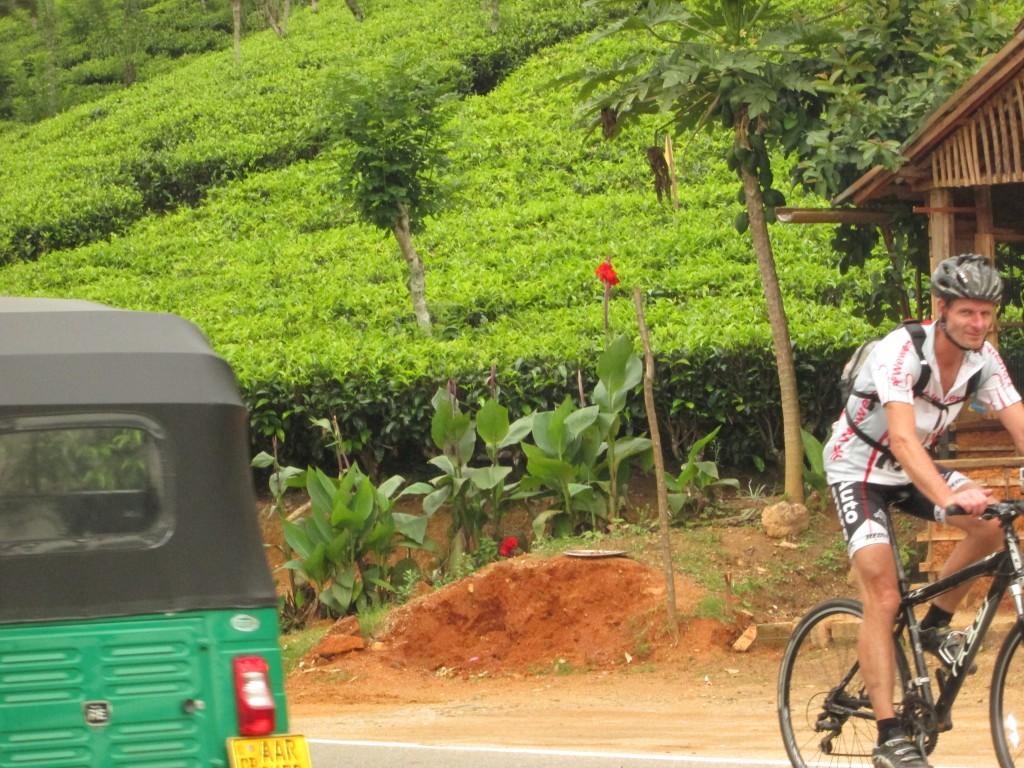 Te plantage langs dagens cykelrute.