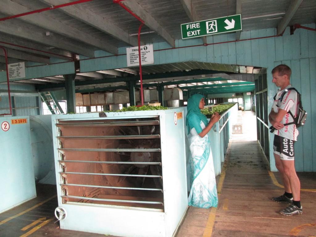 Besøg på te-fabrik med ene-guide.