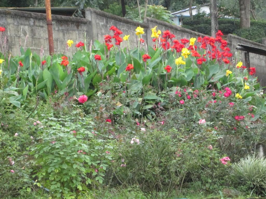 Blomster pryder højlandet lang te-plantager.