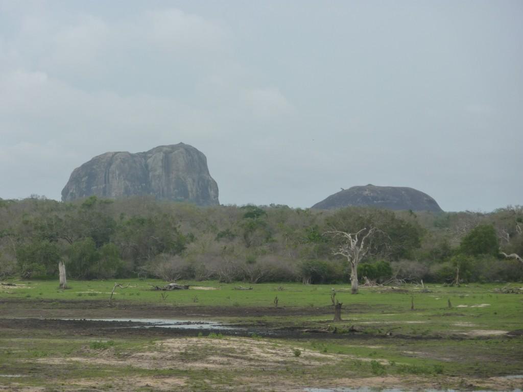 Den største elefant i Yala.