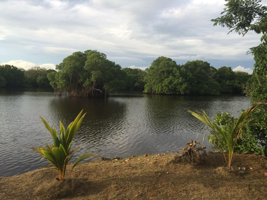 På den ene side Det Indiske Ocean på den anden Mangrove. Udsigt fra min bopæl i disse dage.